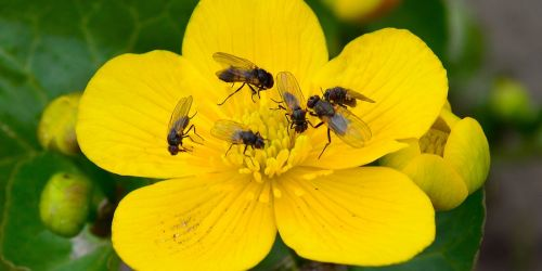 Insects on flower. Photo: Colourbox