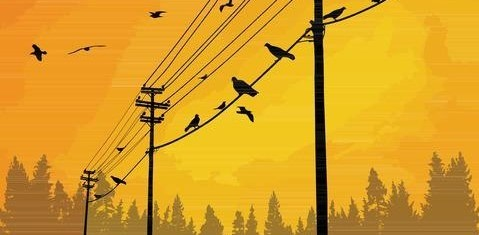 Bird silouettes on telephone wires