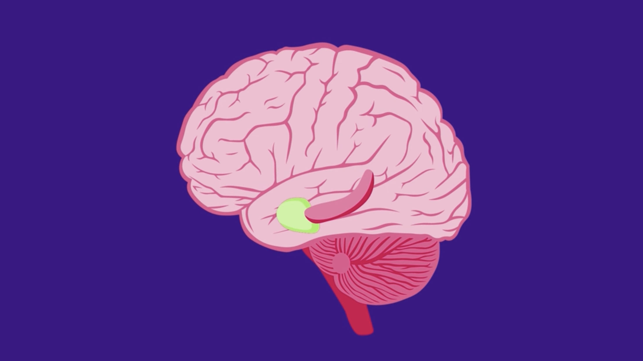 Brain's positioning system (green)