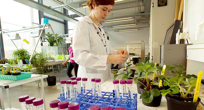 Research at the Department of Biology. Photo.