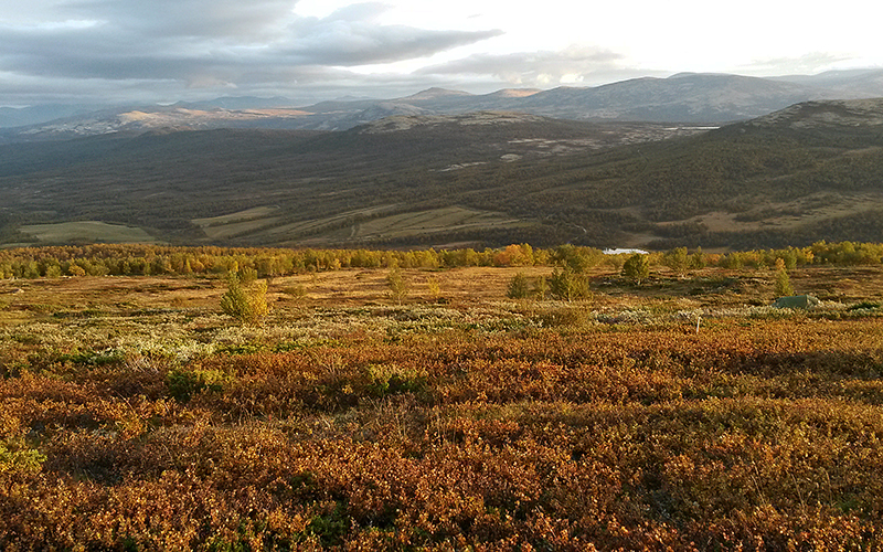 Tundra landscape with autumn colors. Photo