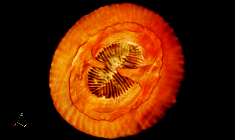 3D image of a coccolith