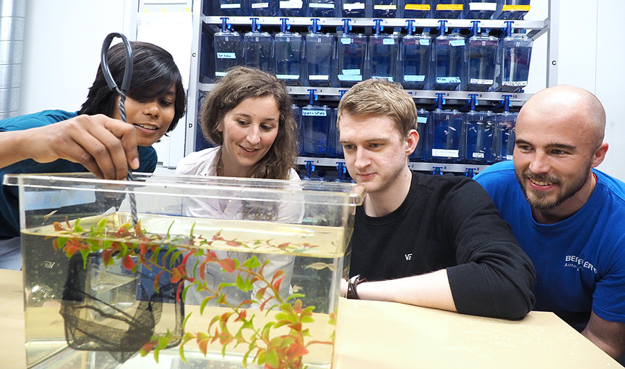 PhD candidates and supervisor catching fish from a small aquarium. Photo