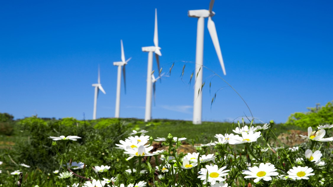 Flowers in the forefront, blurred windmills in the background. Photo.