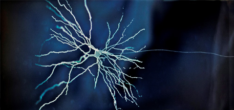 Kvali Institute, brain cell
