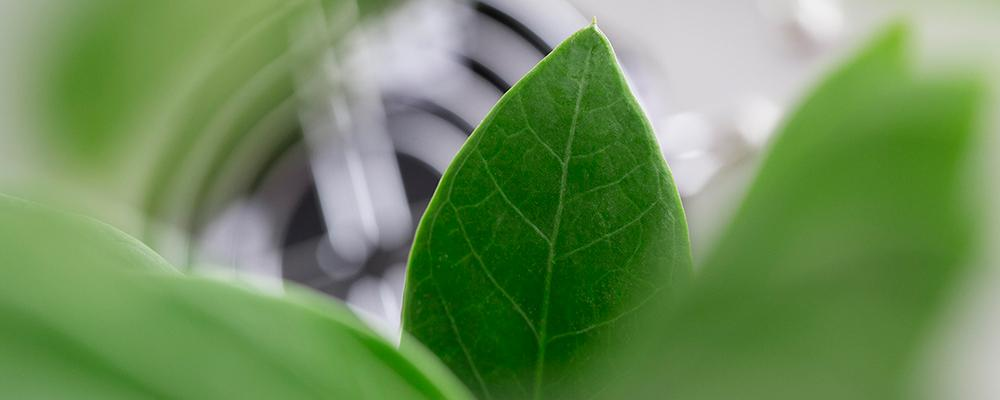Leaves close up. Link to NTNU Team Carbon Capture, utilisation and Storage webpage. Photo: Geir Mogen